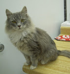 RIP1/11/11 AthensGeorgia- Cat Shelter Open. Need Adopters, Rescues, Fosters,Supplies. Check out Pan