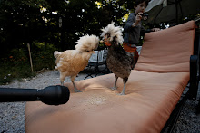 "When interviewd, they said, ""This is (clucking) ridiculous.We just want to lead a simple life."""