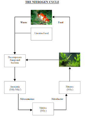Aquarium Nitrogen Cycle