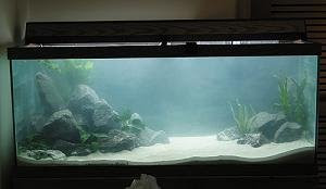 Fish tank cloudy cloudy tank with in 2 days of water for My fish tank water is cloudy