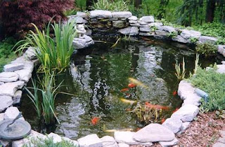 All about aquarium fish set up and maintain koi pond Setting up fish pond
