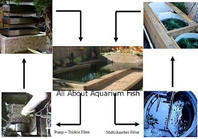 koi pond filtration system diagram
