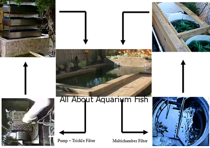 All about aquarium fish what you need to know about koi for Pond filtration system diagram
