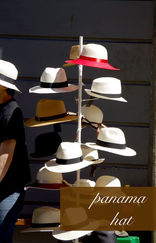 panama hat palm. This traditional brimmed hat