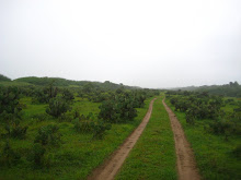 road out of Chicahua