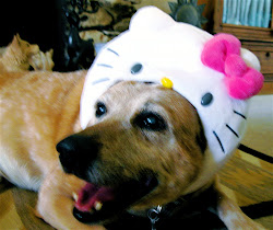 HELLO KITTY-DOG