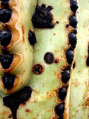 cactus tucson arizona sonoran desert