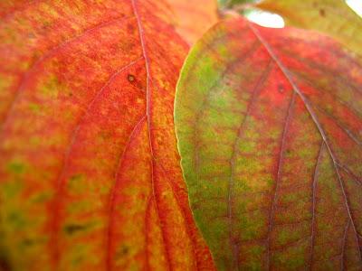 fall leaf photo