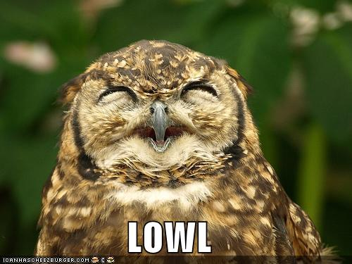 Funny Pics Of Owls. Posted by johnwiltshire at