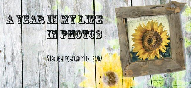 My 365 Photos Blog