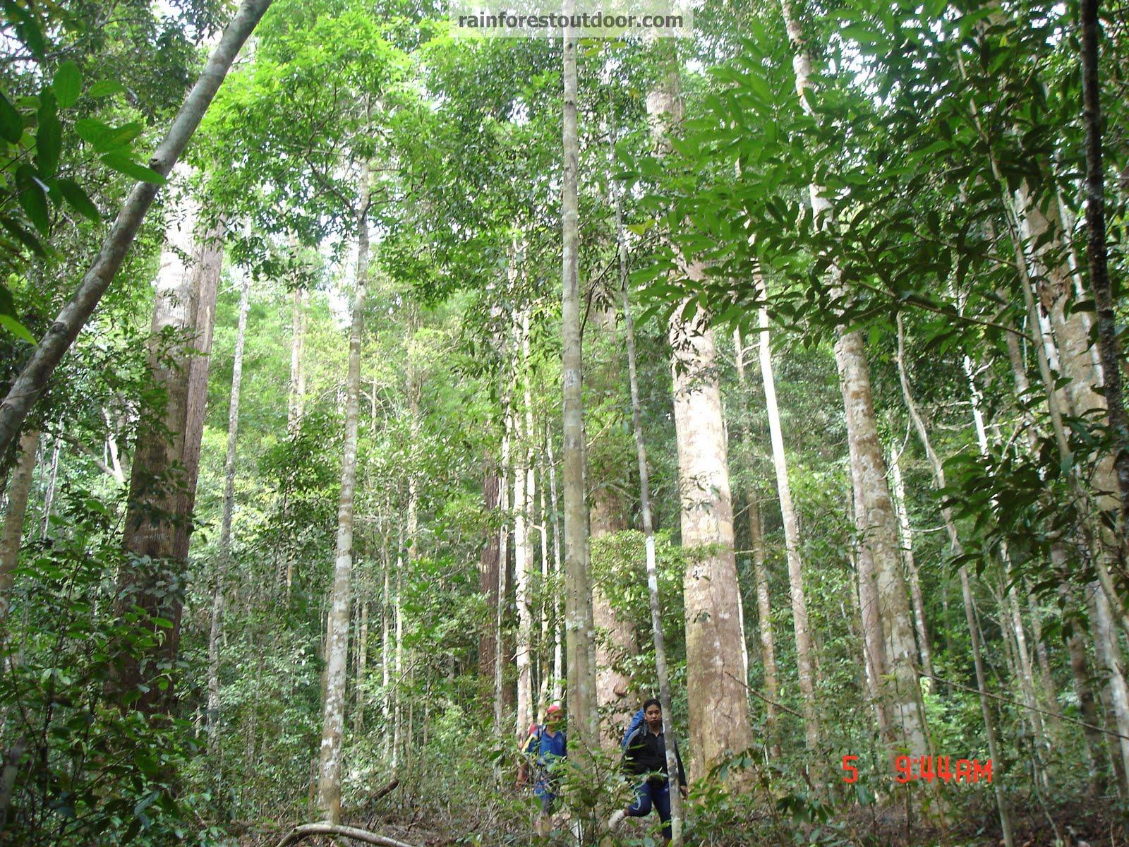 Tropical Rainforest Plants - Buzzle
