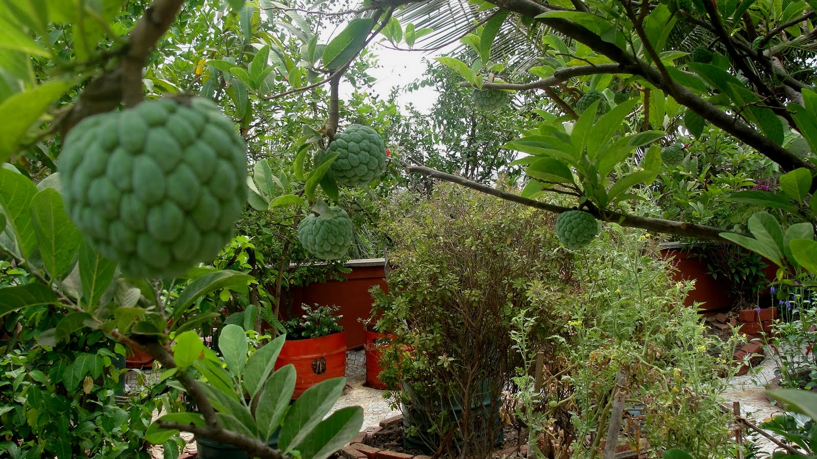Natueco city farming fruits on terrace for Terrace trees