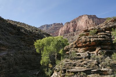 Bright Angel Trail View