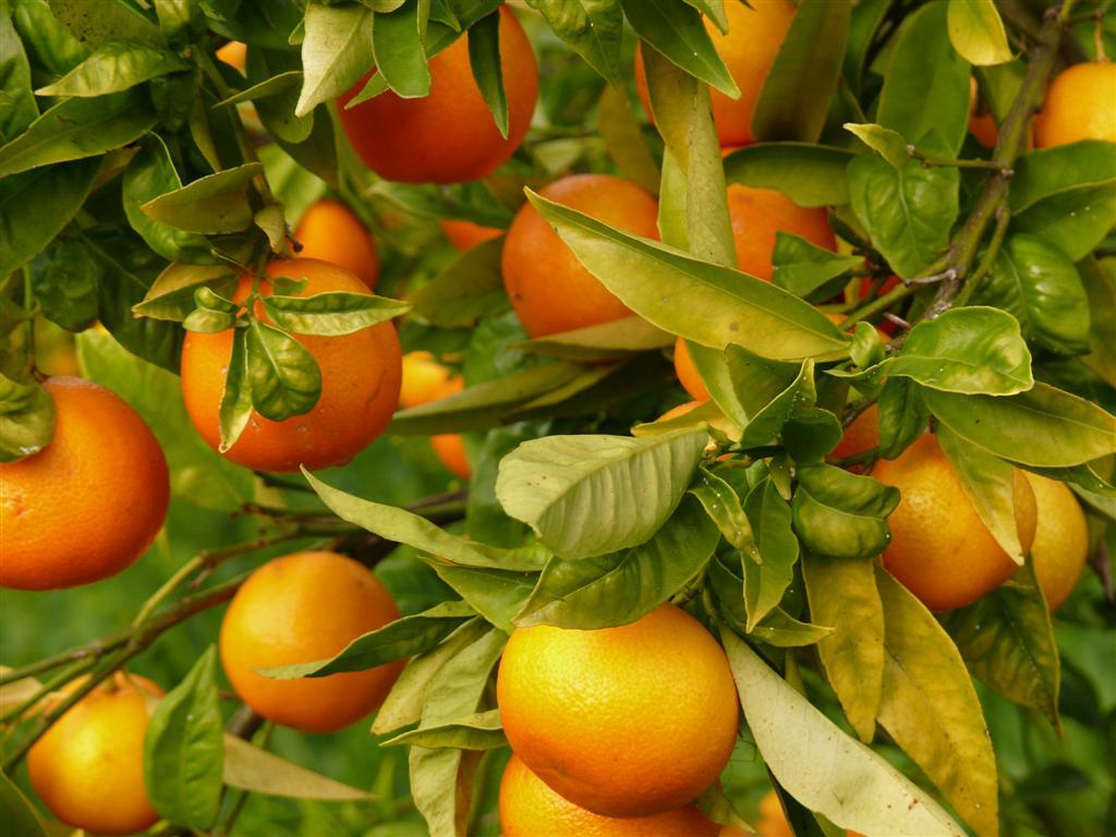 Herbario virtual M.G.M.: noviembre 2009