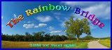 <b>OUR RAINBOW BRIDGE ANGELS</b>