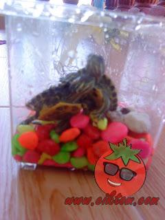 kura-kura diego dan dora 3