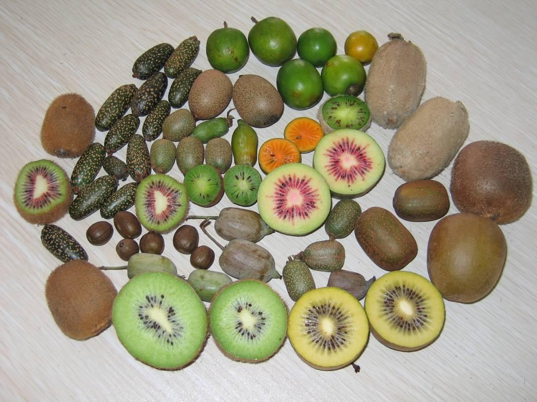 Es un frutal con plantas hembras y plantas macho que hay que
