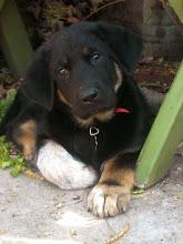Blog Dog Bennett