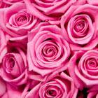 Las rosa y los libros ..no pueden faltar...