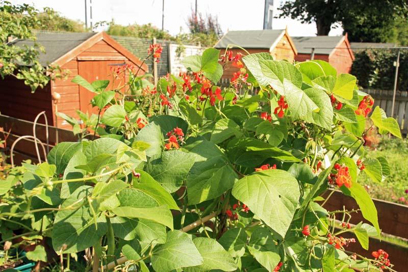 a2k  a seasonal veg table august 2010