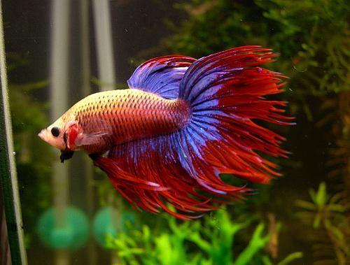 4 formas de ver un acuario fan del pez for Como criar peces koi