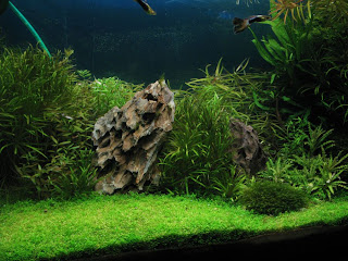 aquascaping die natur im aquarium bodengrund und hardscape aquascapia. Black Bedroom Furniture Sets. Home Design Ideas