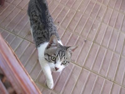 Cat In Desert. Desert cat--does he look like
