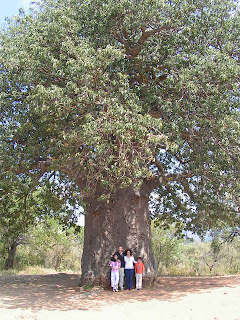 an autobiography of a tree On this page you can read or download autobiography of a tree in 1000 words download in pdf format.