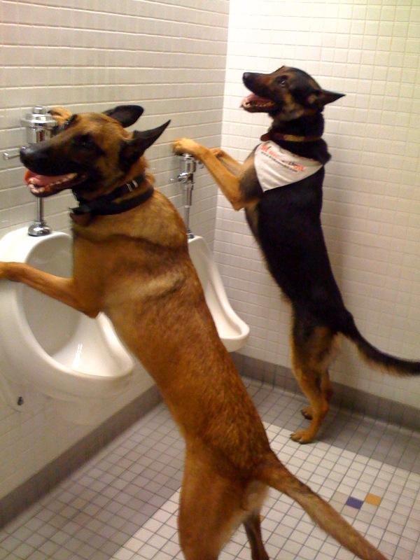 How to potty train a dog