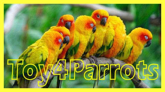 Toy4Parrots