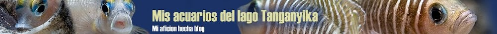 Mis acuarios del lago Tanganyika