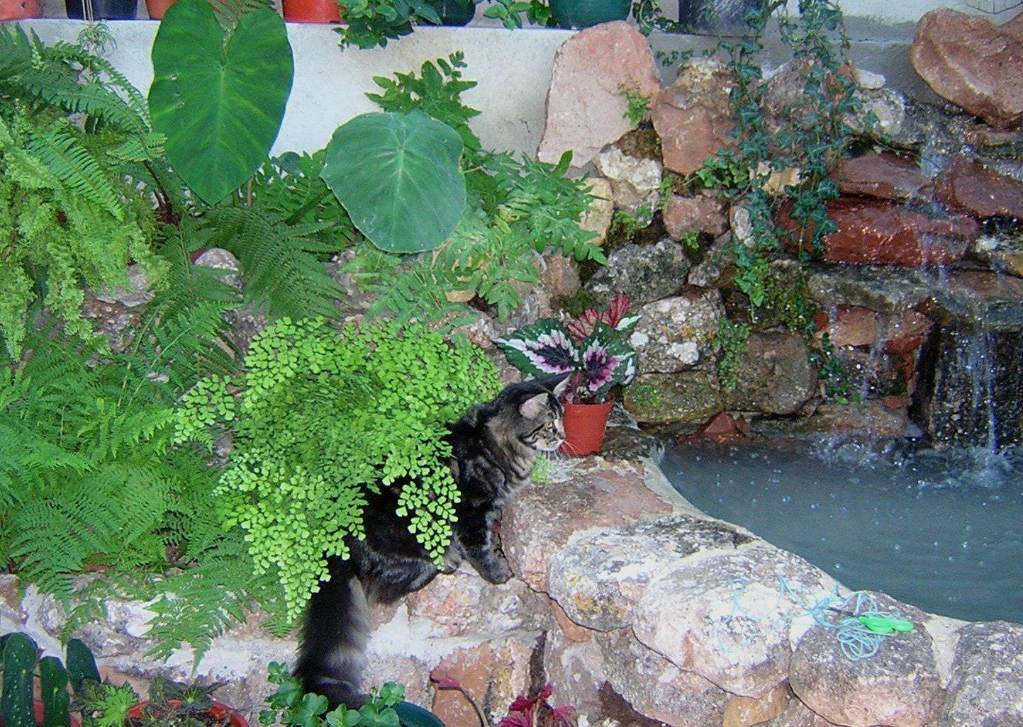Flores com gatos