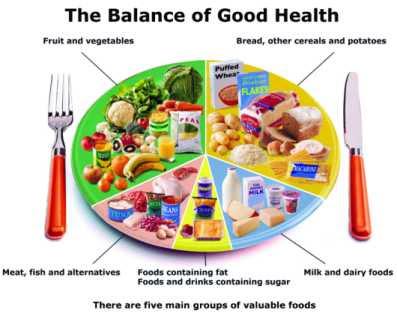food chain pyramid worksheet. food pyramid worksheets.