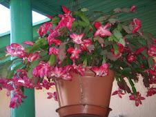 Flores para recepcionar você!