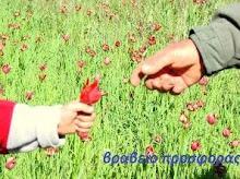 το δώρο της Ειρήνης Σ