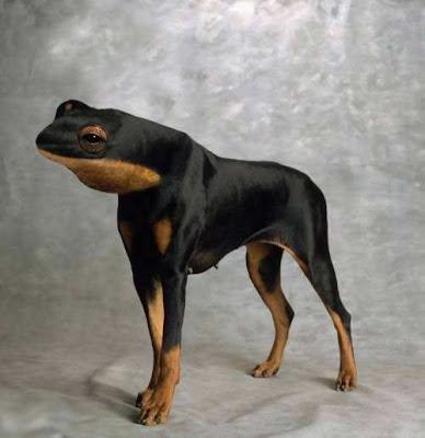 Animales Raros (Photoshop)
