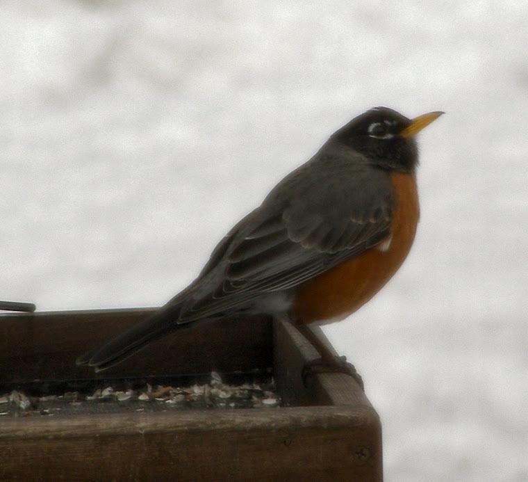 Pássaro Poeta