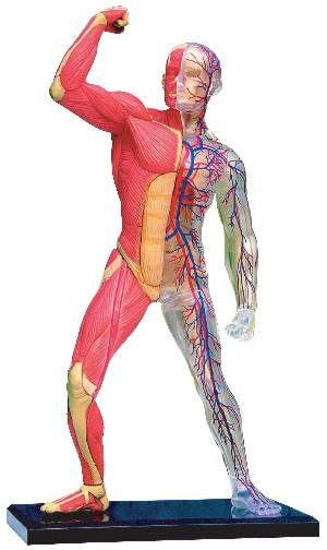 Outline of a body for kids This is your index.html page