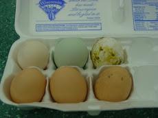 More eggs!