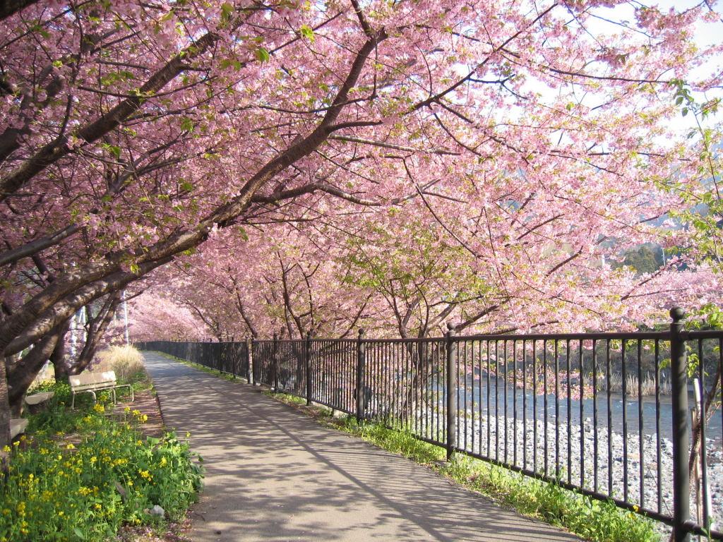 Myori Sakura