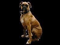 Dog Walking With Elbow Dysplasia