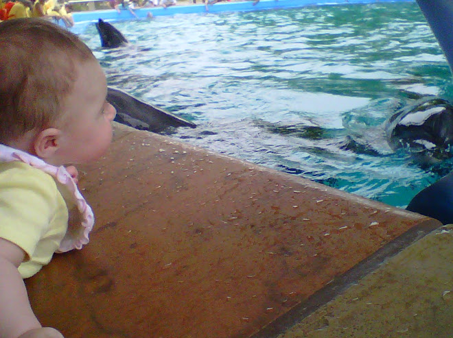 Lilly looking at Dolphins Sea World