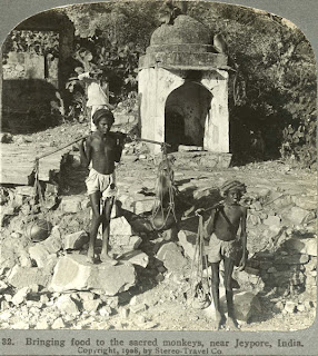 India 100 years ago: Bringing food to the sacred monkeys, near Jeypore, Orissa, India