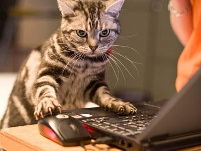 http://2.bp.blogspot.com/_0gJbFGlRy-o/SoAI0F7jXPI/AAAAAAAAAkY/lMHY_iT71w0/s400/clever_cat.jpg