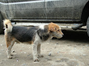 Dog in Arunachal