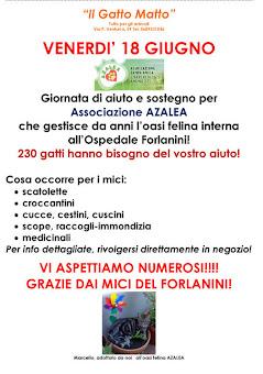 ROMA, 18 GIUGNO:  UN AIUTO AL GATTILE AZALEA