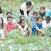 Horta Comunitária Bairro Morro Azul Quadra 12