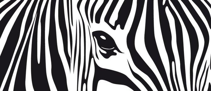 Textura de zebra - Imagui