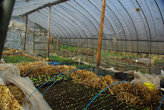ARI greenhouse
