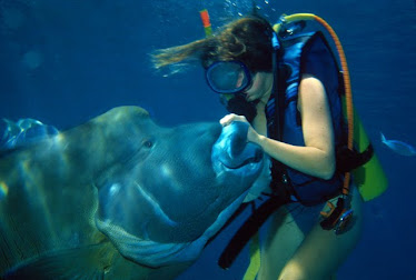 Melanie and Maori Wrasse fish